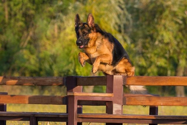 Hunde Draussen Halten