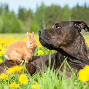 Das eigene Haustier zum Petfluencer machen