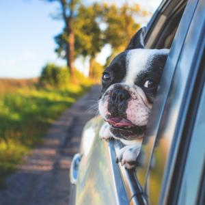 Hunde und ihre Transportbox