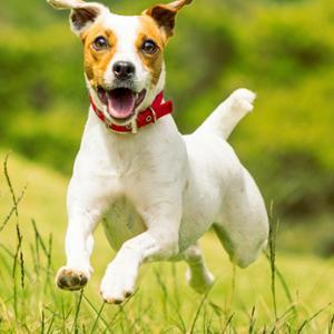 Ohren-Check bei Hund und Katze