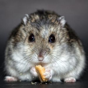 Die Bedürfnisse eines Hamsters