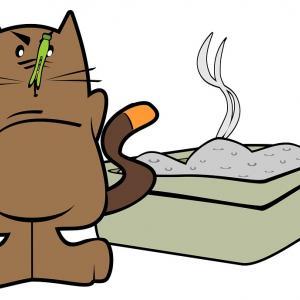 Rund ums Katzenklo