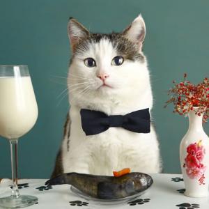 Was dürfen Katzen nicht fressen?