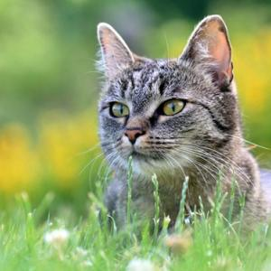 Vier Tipps für bessere Katzenfotos