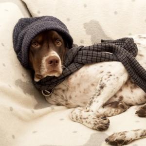 Leistungen einer Hundekrankenversicherung