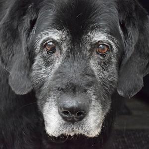 Tipps für Hundesenioren