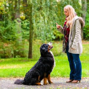 Die Top Tipps für die Hundeerziehung