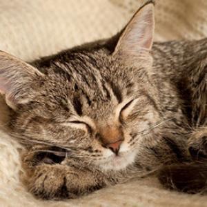 Eine rollige Katze beruhigen