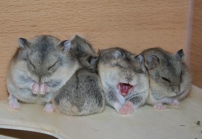 Bedurfnisse Eines Hamsters Doggypet Ihr Vier Pfoten Shop