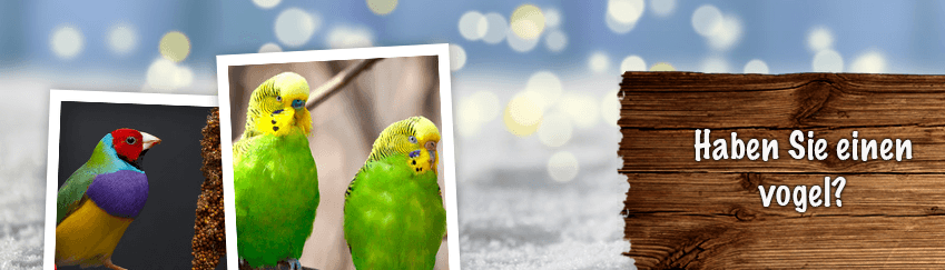 KategorieBanner_Vogelwelt Platzhalter